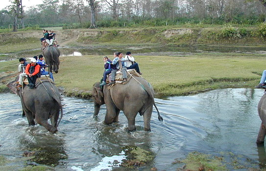 elephant-jungle-safari-national