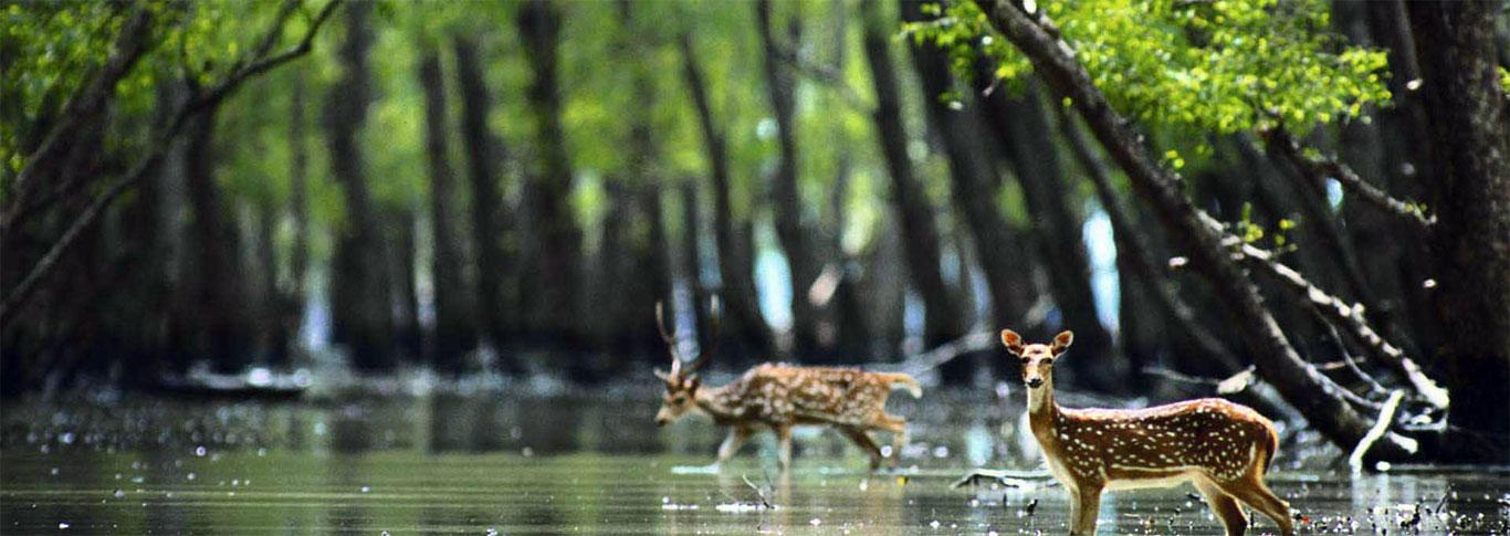 rishikesh wildlife tour rishikesh wildlife packages wildlife
